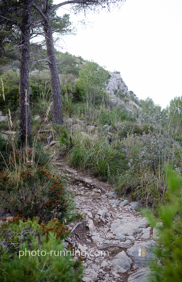 Trail through Garraf
